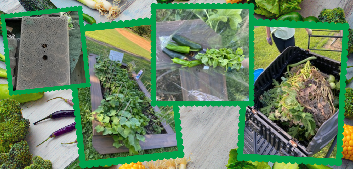 Pictures of the CRS Garden with seed pots, garden beds, harvested vegetables, and composting